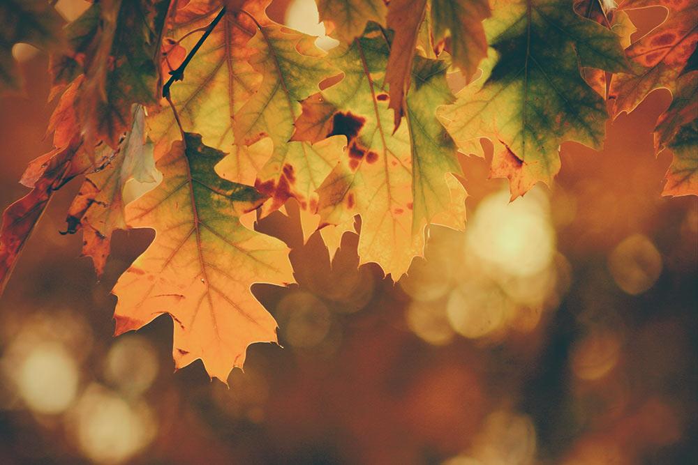 Herbstliches Bild